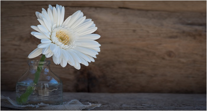 Arrange Gerbera Flowers